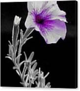 A Splash Of Purple Canvas Print