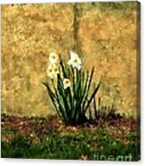 A Spot Of Spring Canvas Print