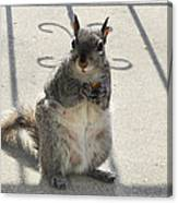 A Squirrel Known As Chippy Canvas Print