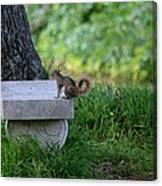 A Squirrel's Day Out Canvas Print