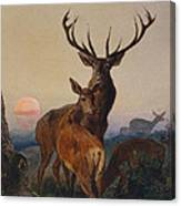 A Stag With Deer In A Wooded Landscape At Sunset Canvas Print