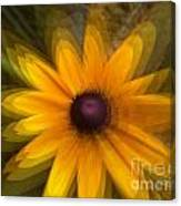 A Star Flower Canvas Print