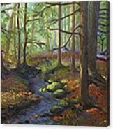 A Stream Of Light Canvas Print