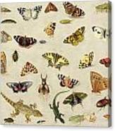 A Study Of Insects Canvas Print