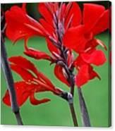 A Summer Red Flower Canvas Print