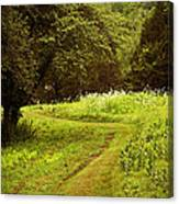 A Summer's Trail Canvas Print