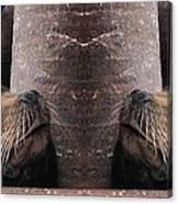 A Symmetrical Sea Lion Canvas Print