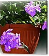 A Taste Of Geraniums Canvas Print