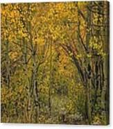 A Teton Autumn Canvas Print