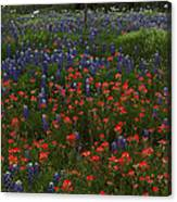 A Texas Roadside Canvas Print
