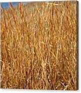 A Thicket Of Grass Canvas Print