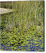 A Touch Of Beauty Canvas Print