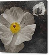 A Touch Of Color - Poppy Canvas Print
