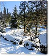 A Touch Of Snow Canvas Print