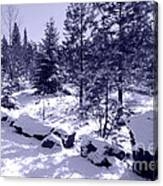 A Touch Of Snow In Lavender Canvas Print