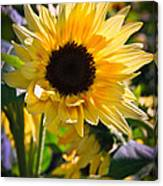 A Touch Of Sunflower Canvas Print