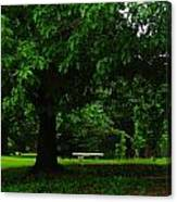 A Tree And A Bench Canvas Print
