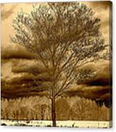 A Tree At Appleton Canvas Print