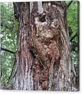 A Tree Creature Canvas Print