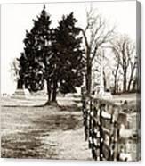 A Tree Grows In Gettysburg Canvas Print