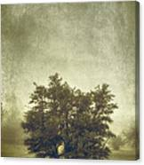 A Tree In The Fog 2 Canvas Print