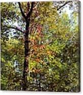 A Tree's Life Canvas Print