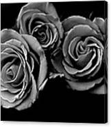 A Trio Of Roses Canvas Print
