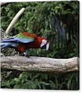 A Very Colorful And Bright Macaw Bird Perched On A Branch Canvas Print