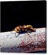 A Vespid Wasp  Canvas Print
