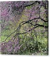 A View Of A Blooming Redbud Tree Canvas Print