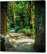 Pathway Cathedral Grove Canvas Print