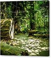 A Walk Among The Giants Collection 3 Canvas Print