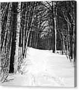 A Walk In Snow Canvas Print