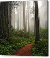 A Walk In The Fog Canvas Print