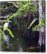 A Walk In The Glades Canvas Print