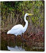 A Walk In The Wetlands Canvas Print