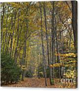A Walk In The Woods II Canvas Print