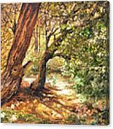 A Walk Through Canvas Print