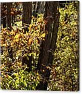 A Walk Through The Woods - 1 Canvas Print