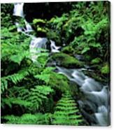 A Waterfall In Redwood National Park Canvas Print