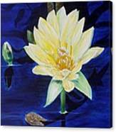 A Waterlily Canvas Print