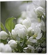 A Whisper Of Spring Canvas Print