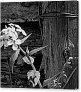 A White Flower With An Old Fence Canvas Print