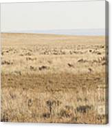 A White Mustang Feeds On Dry Grass Fields Of Arizona Canvas Print