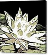 A  White Water Lily Canvas Print