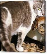 A Wild Cat Catching A Chipmunk Canvas Print