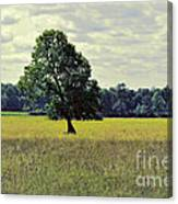 A Wind Blown Tree On The Prairie Canvas Print