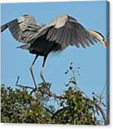 A Winged Stance Canvas Print