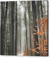 A Winters Path Canvas Print