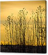 A Winter's Silhouette Canvas Print